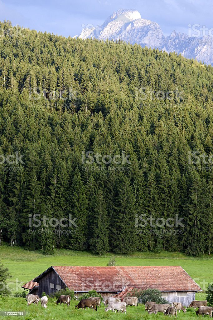 Farm in front of a mountain royalty-free stock photo