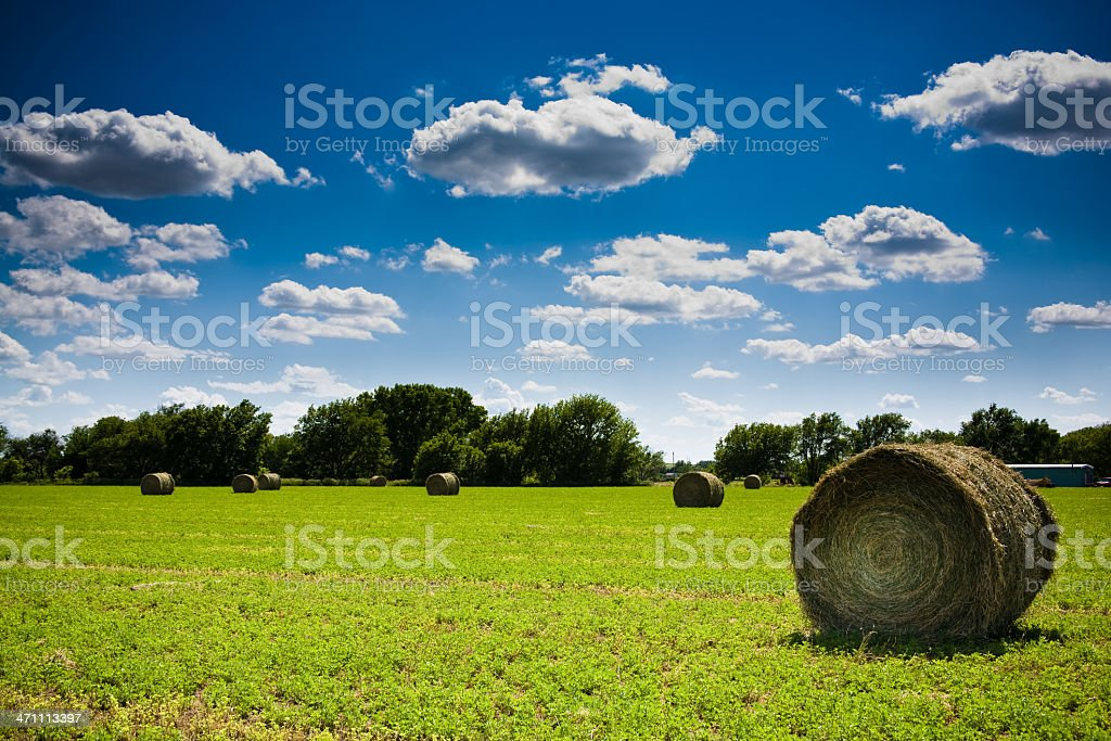 Farm in Illinois stock photo