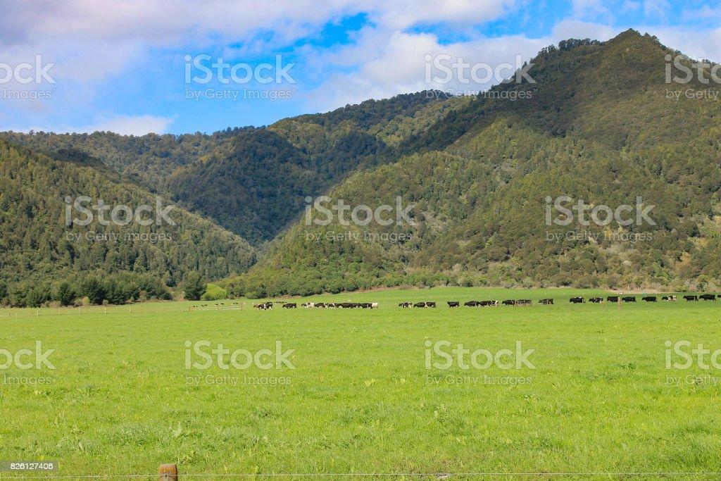Farm in New Zealand stock photo