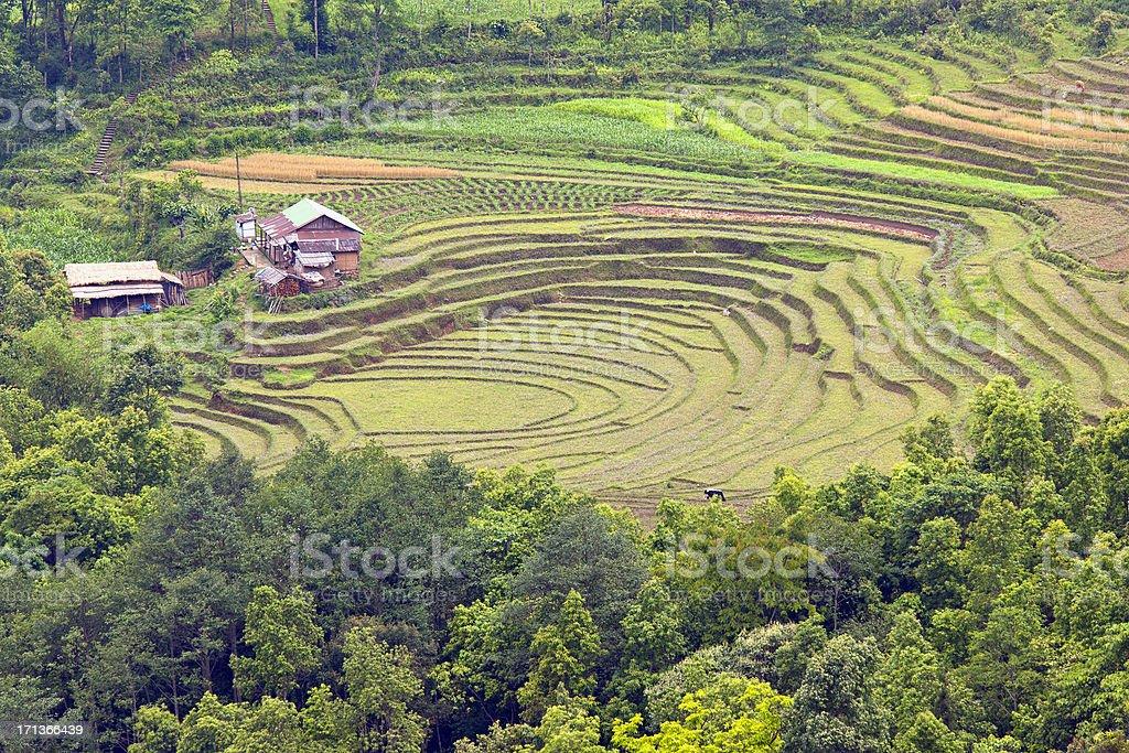 Farm in Rumtek Village Sikkim India Asia royalty-free stock photo