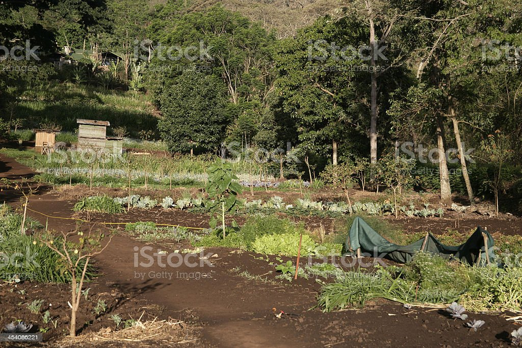Farm in Tanzania stock photo