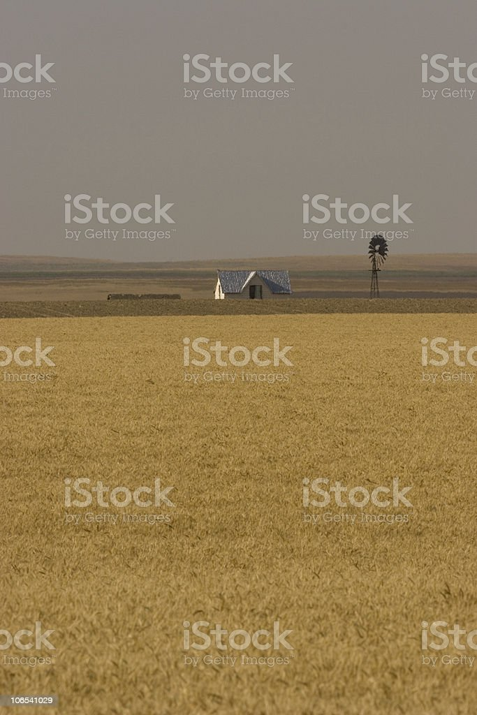 Farm in wheat field with Windmill stock photo
