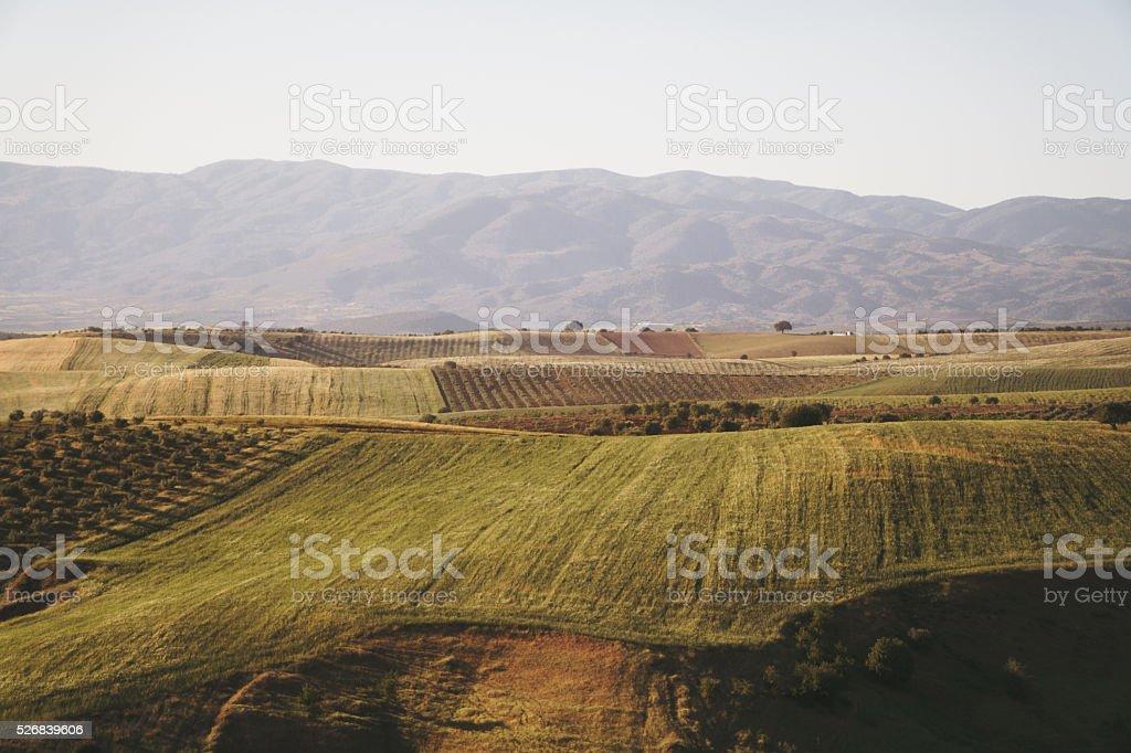 Farm land at sunset stock photo