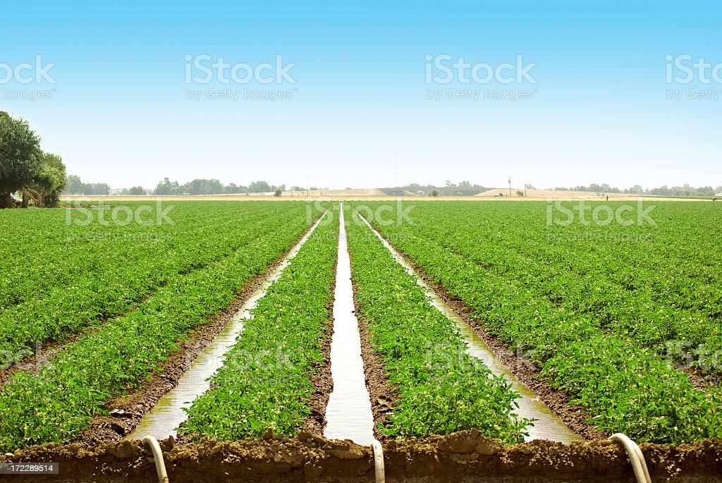 Farm land with row crops and water irrigation stock photo