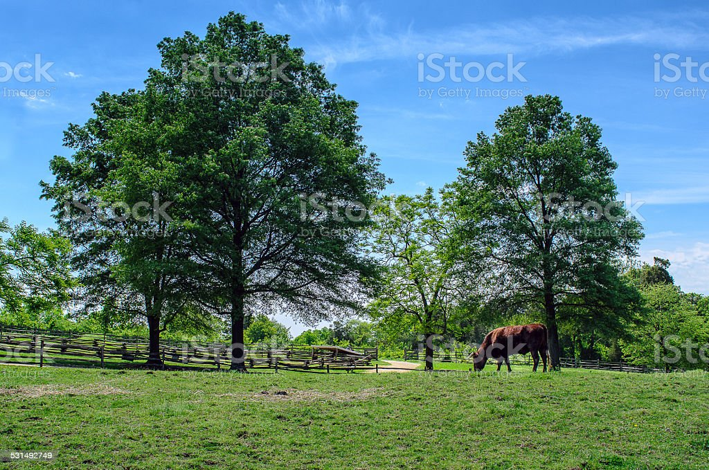 Farm vida foto royalty-free