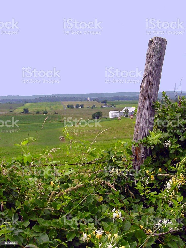 Farm Life royalty-free stock photo