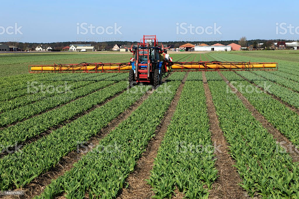 Farm machinery spraying pesticides on a bulb field stock photo