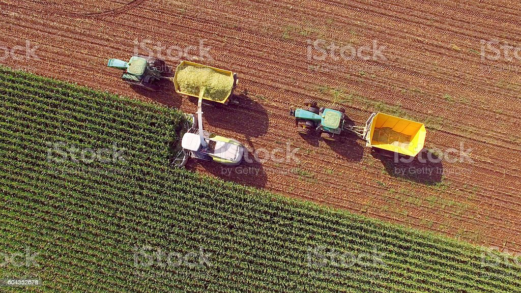 Farm machines harvesting corn for feed or ethanol stock photo