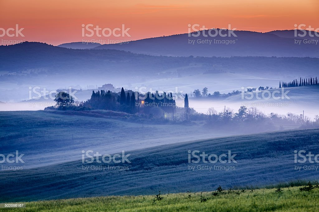 Farm of olive groves and vineyards in foggy morning royalty-free stock photo
