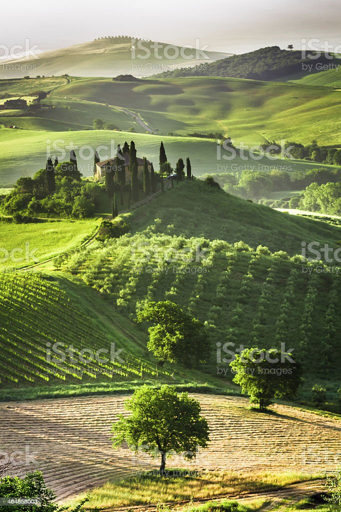 Farm of olive groves and vineyards royalty-free stock photo