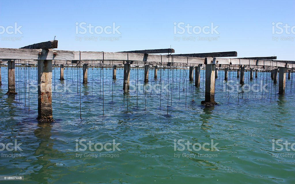 Farm on cultivation of mussels in the Mediterranean stock photo