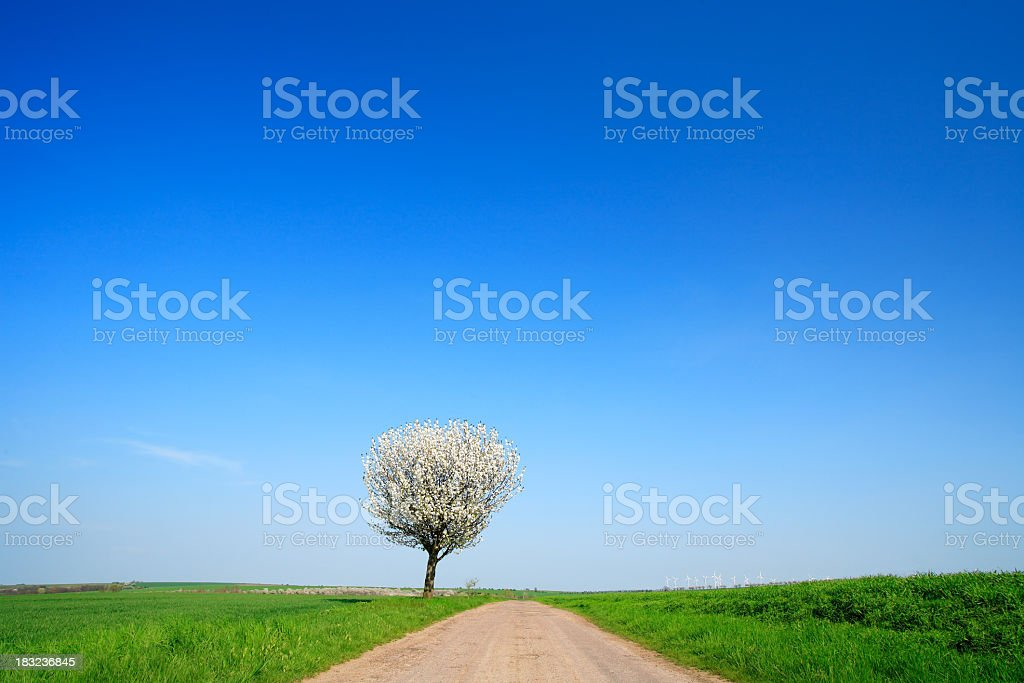 Farm Road in Spring III royalty-free stock photo