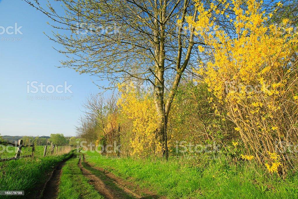 Farm Road in Spring III stock photo
