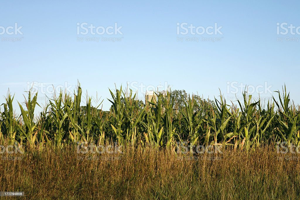 Farm Scenic royalty-free stock photo