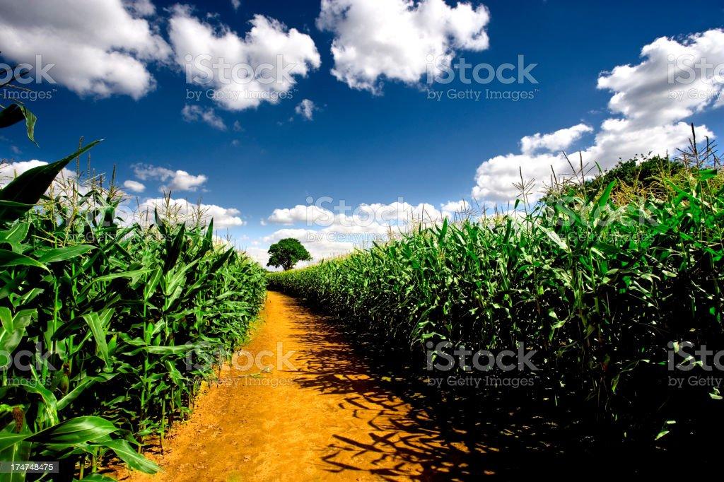 Farm track royalty-free stock photo