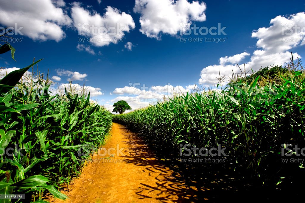 Farm track stock photo