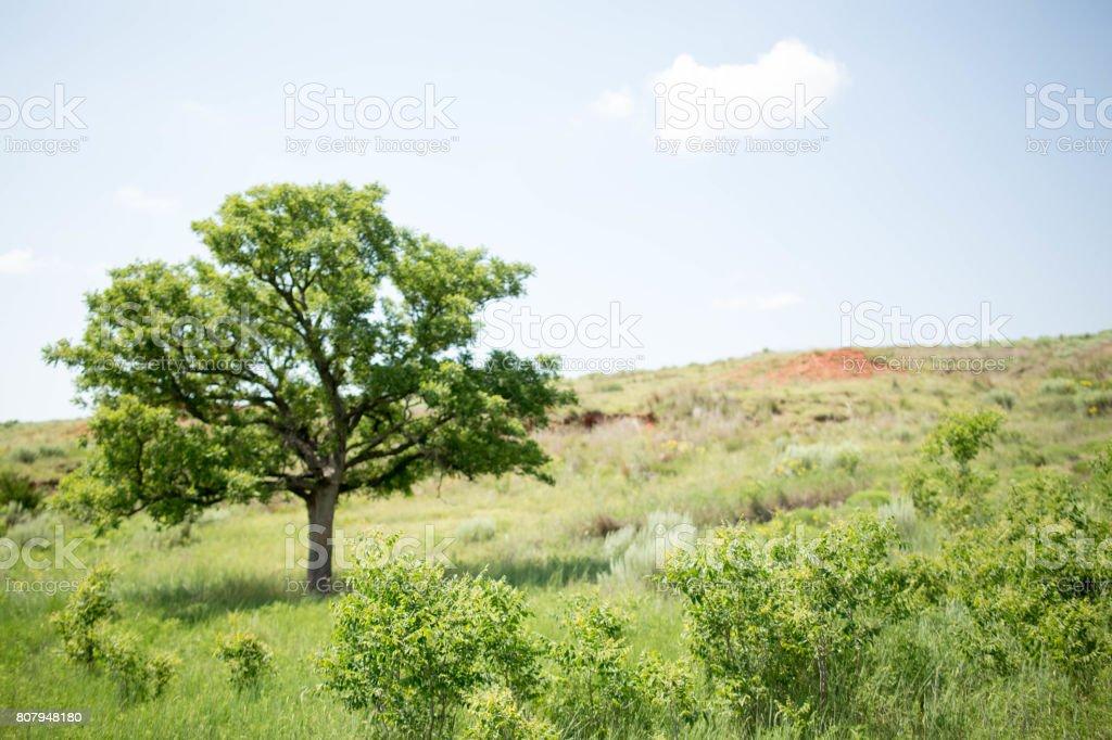 Farm Tree stock photo