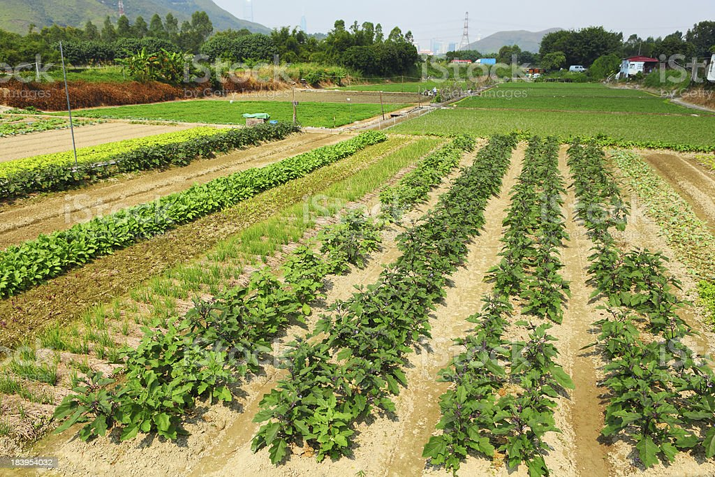 Farm with agricultural product royalty-free stock photo