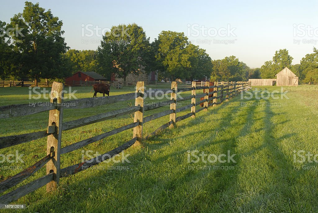 Farm with Cows royalty-free stock photo
