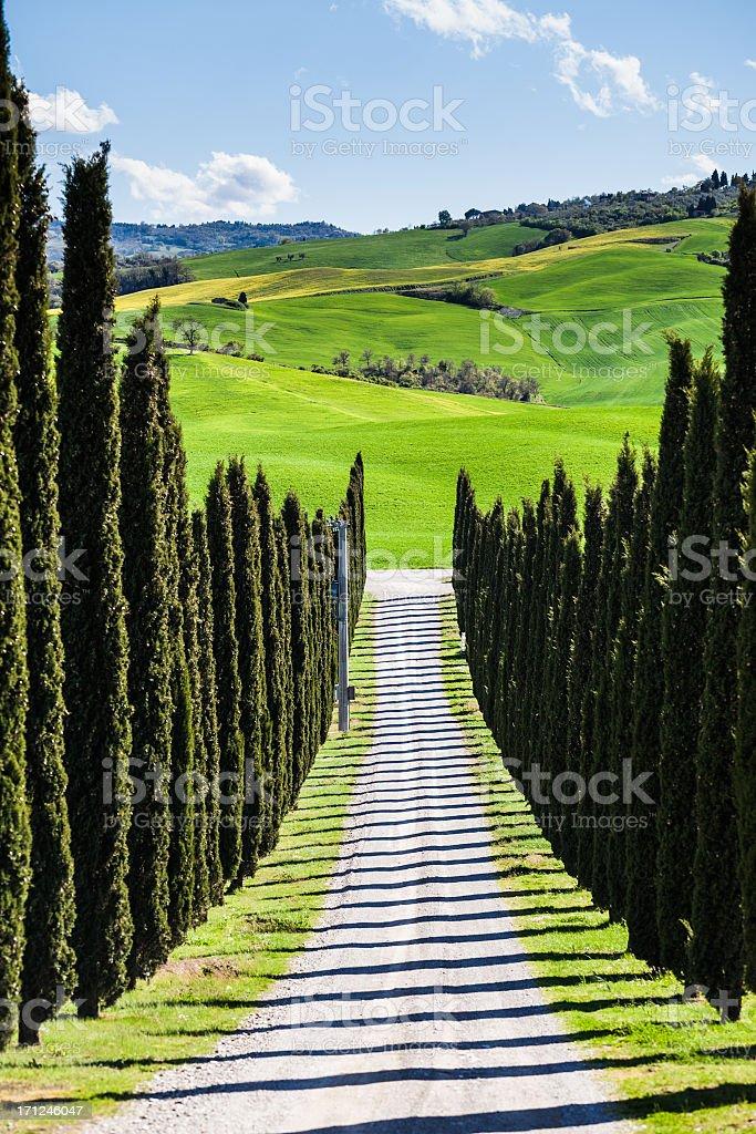 Farm with Cypress, Tuscany royalty-free stock photo