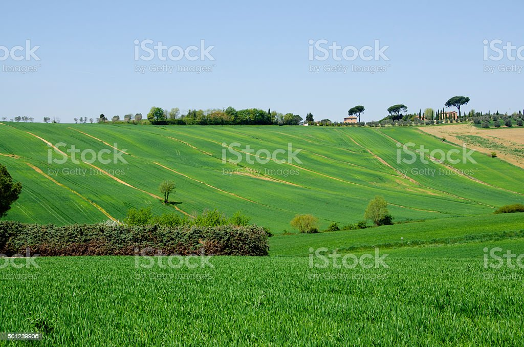 Farm with Green Fields in Tuscany, Italy stock photo