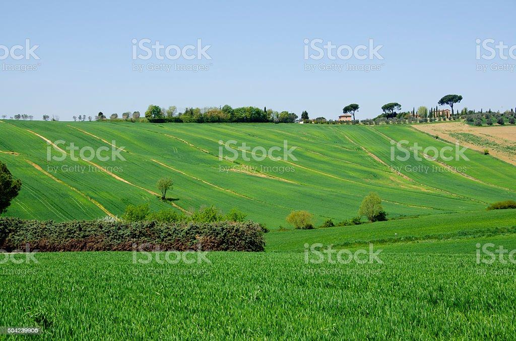 Farm with Green Fields in Tuscany, Italy stock photo