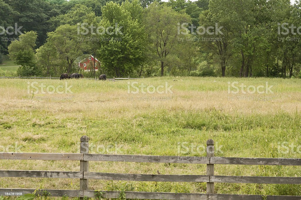 Farm with Horses royalty-free stock photo