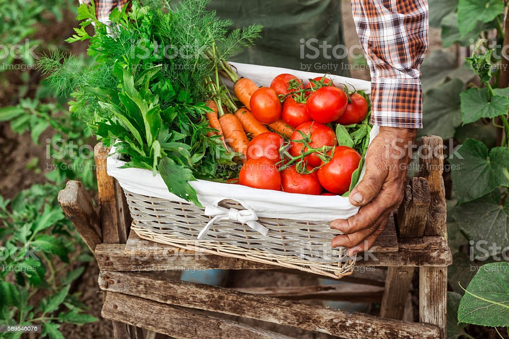 Farm worker carrying a crate full of fresh vegetables stock photo