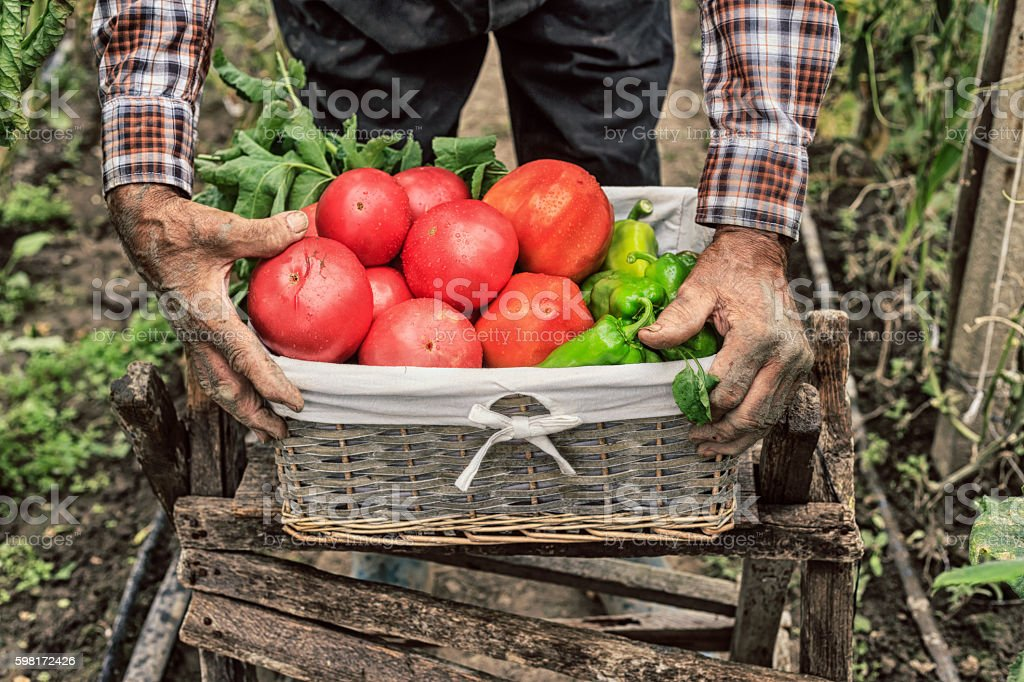 Farm worker holding a crate full of fresh vegetables stock photo