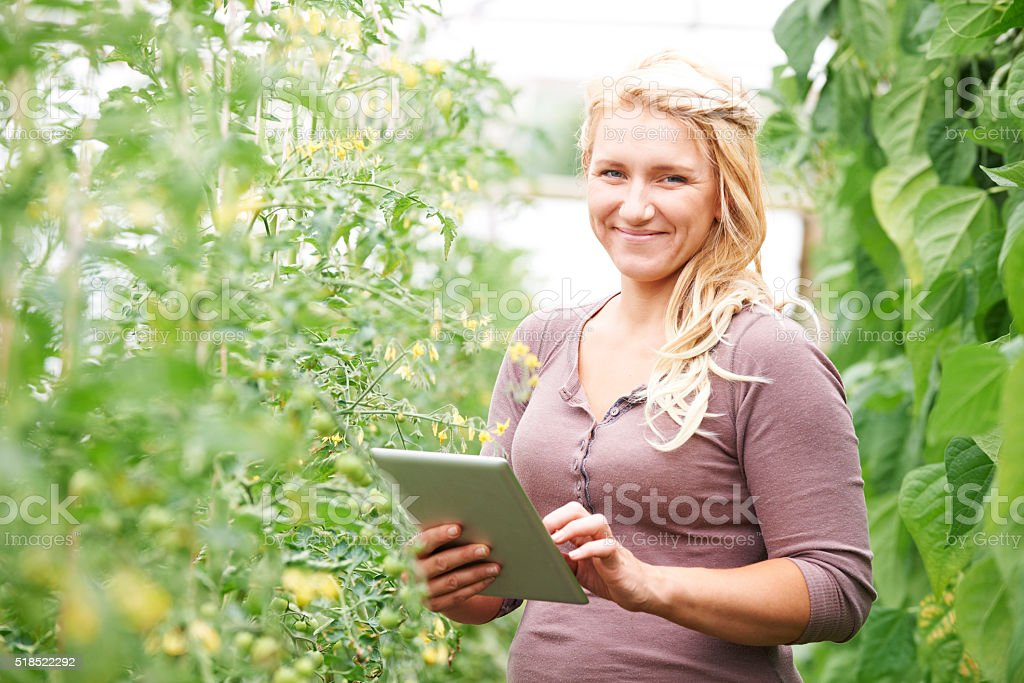 Farm Worker In Greenhouse Checking Tomato Plants Using Digital T stock photo