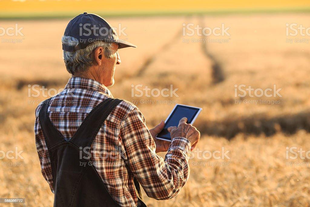 Farm worker using digital tablet on wheat field stock photo
