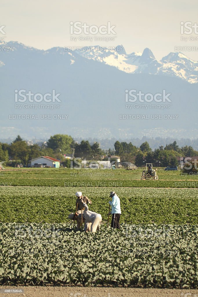 Farm Workers in Richmond British Columbia stock photo