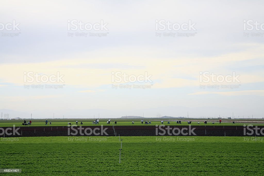 Farm Workers In The California Fields royalty-free stock photo