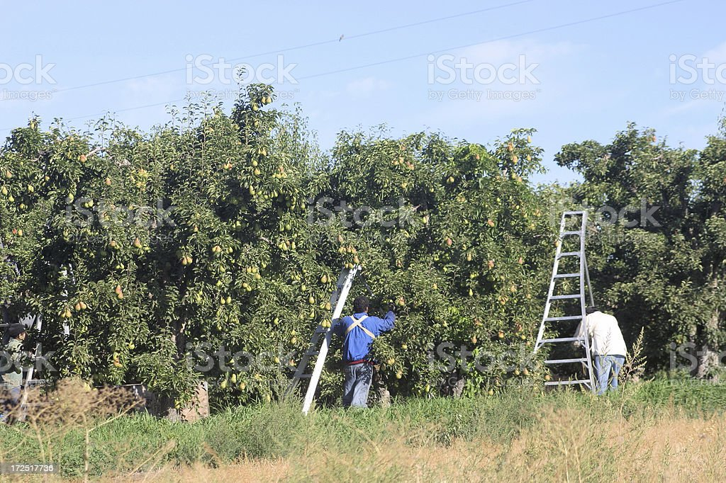 Farm workers stock photo