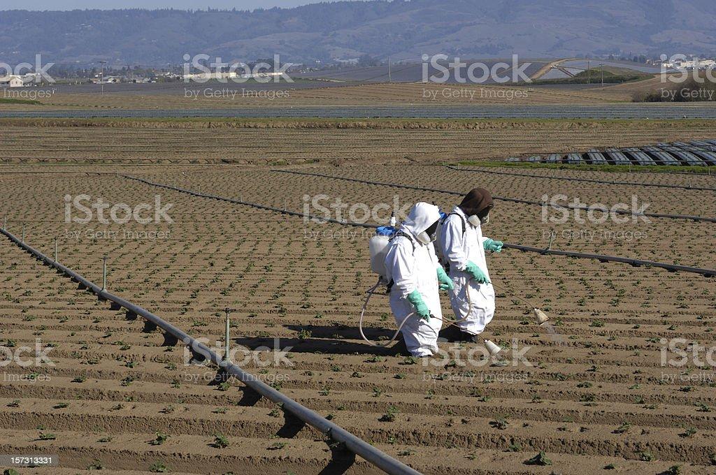 Farm Workers Spraying Seedlings royalty-free stock photo