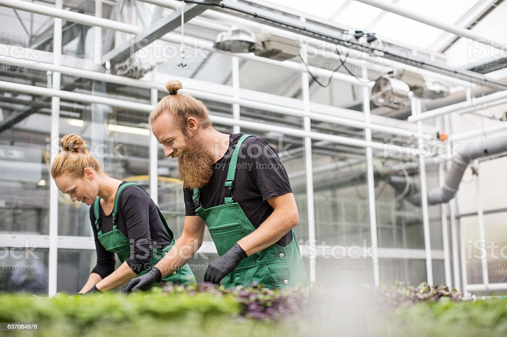 Farm workers working in greenhouse stock photo