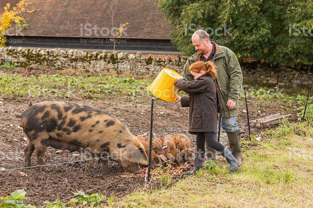 Farmer and Girl Feeding Pigs Vegetables on an Organic Farm stock photo