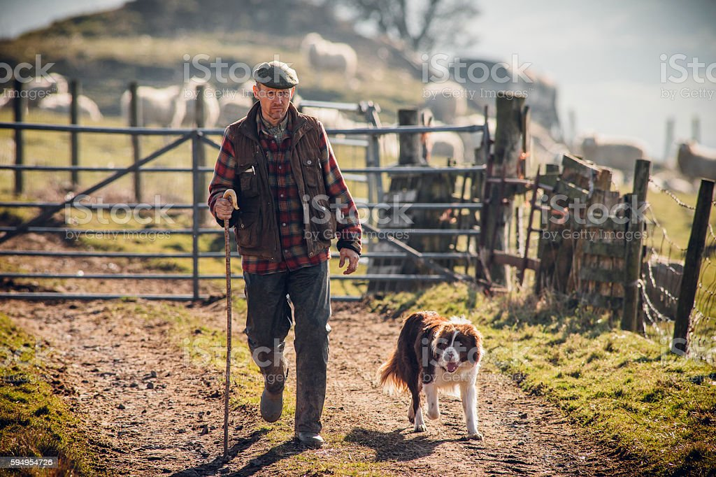 Farmer and his Dog stock photo