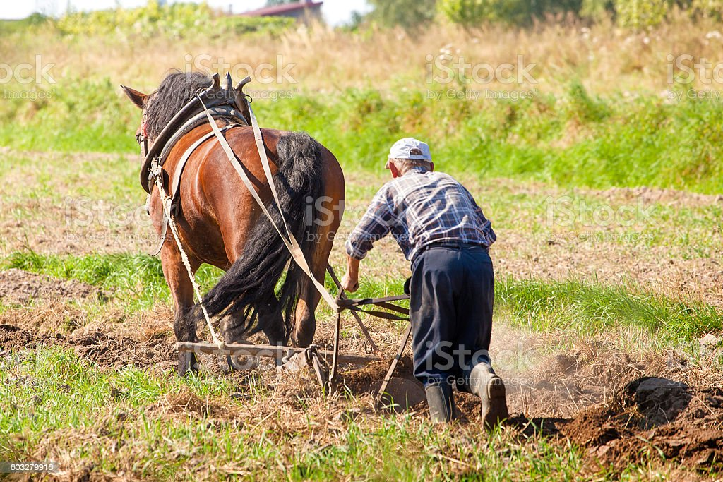 Farmer and horse plowing stock photo