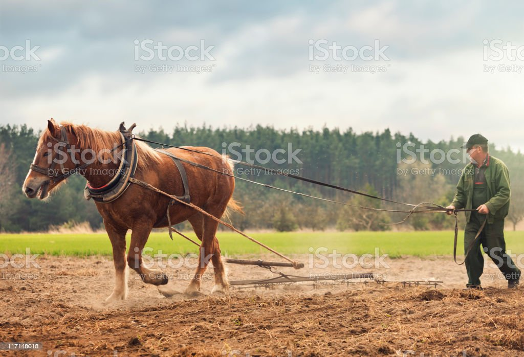 Farmer and horse working in the field stock photo