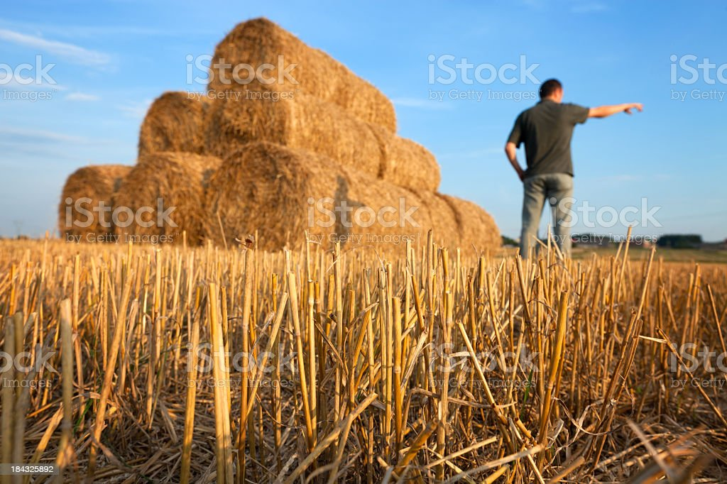 Farmer and straw stubble royalty-free stock photo