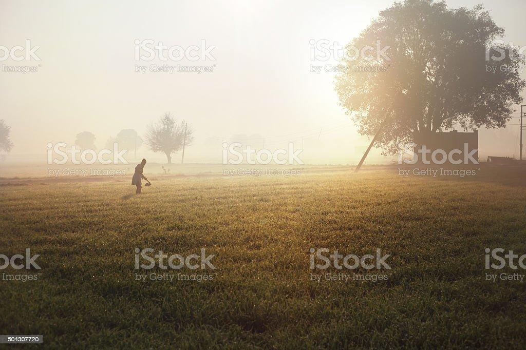 Farmer And Sunrise (Wheat Field) stock photo