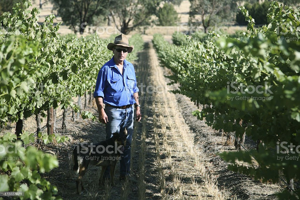 Farmer and vineyard royalty-free stock photo