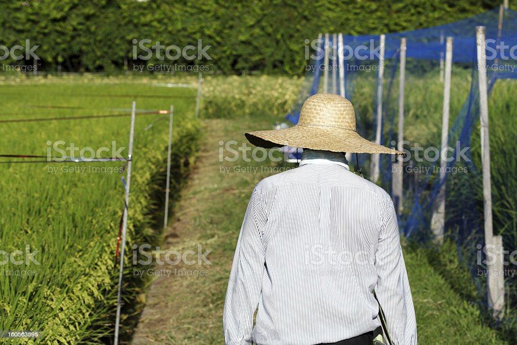 Farmer im Reisfeld Lizenzfreies stock-foto