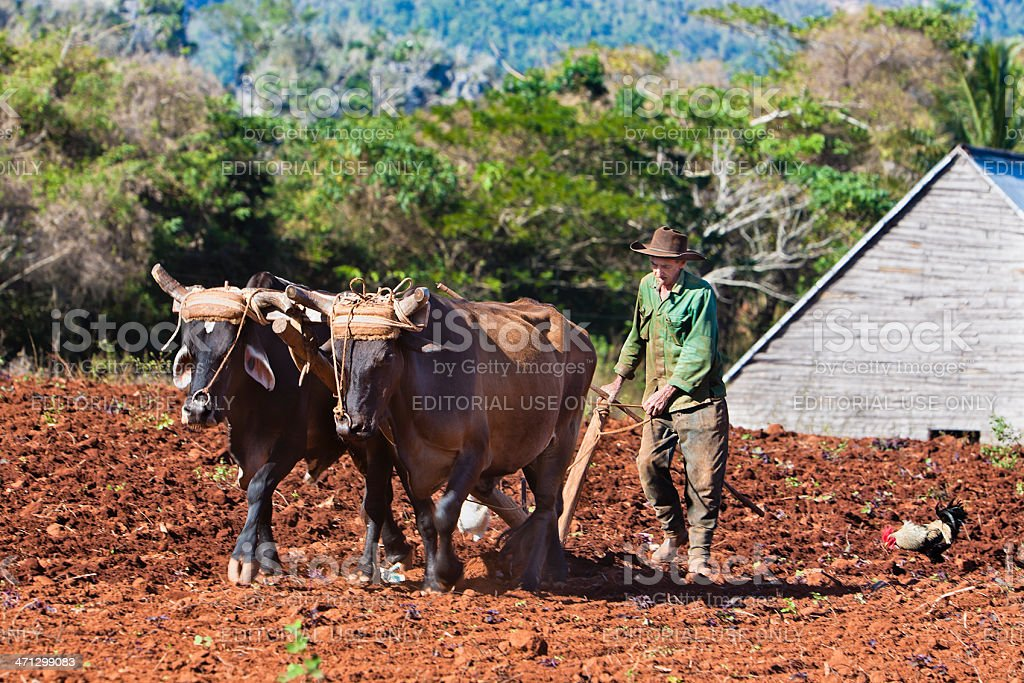 Farmer At Work, Cuba stock photo