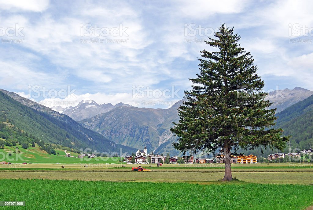 Farmer at work in Oberwald stock photo