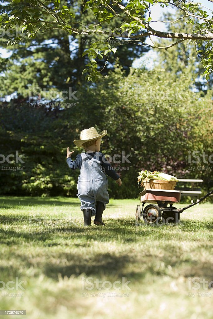 Farmer boy with a basket of corn royalty-free stock photo