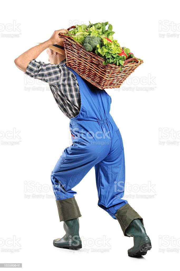Farmer carrying a basket of vegetables on his back royalty-free stock photo