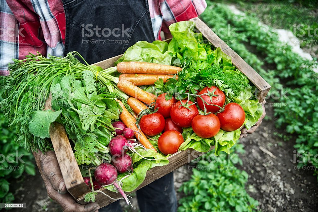 Farmer carrying a crate full of fresh vegetables stock photo