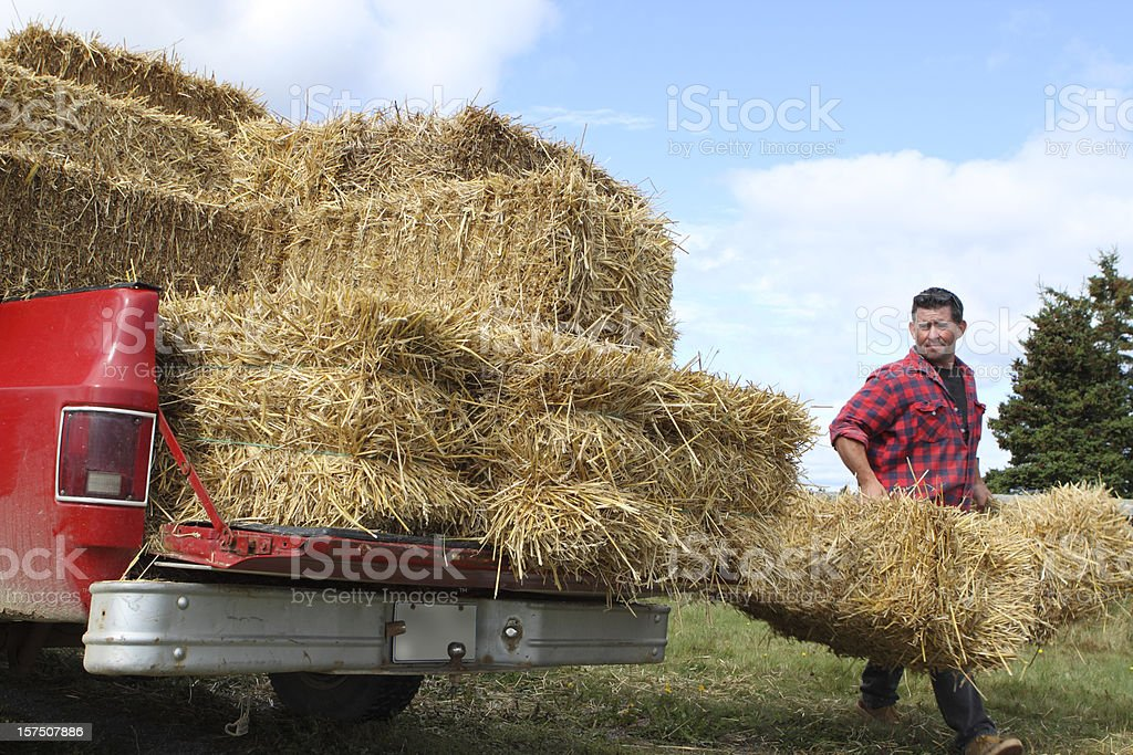 Farmer carrying bales of straw stock photo
